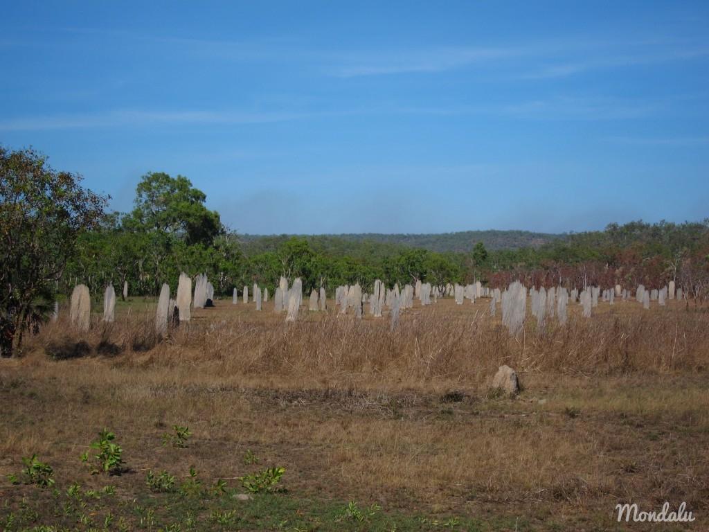 Champs de termitière magnétique Australie