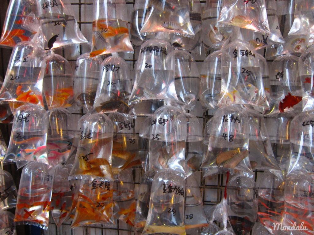 Photo du goldfish market à Hong-Kong