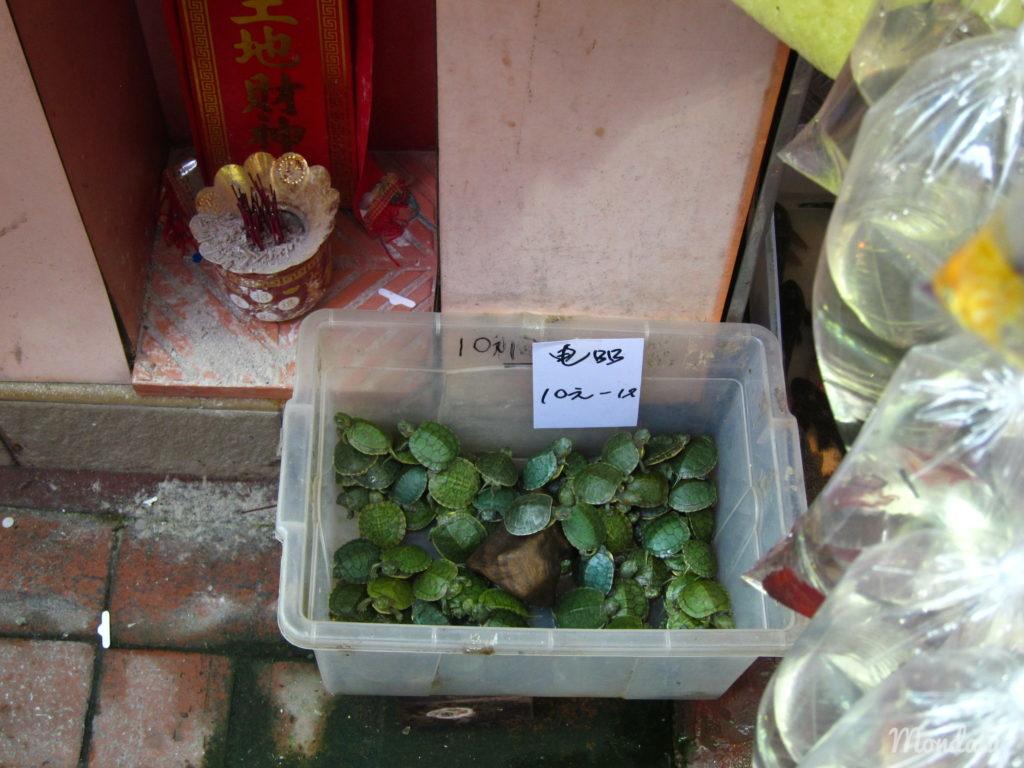 Goldfish market et tortues à Hong-Kong
